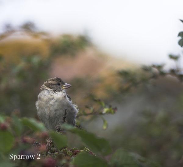 IMG_8698-01 - Birds: WIld