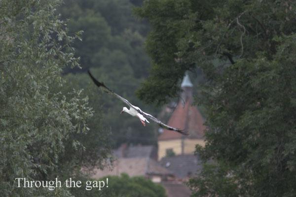 IMG_3559-01 - Birds: WIld