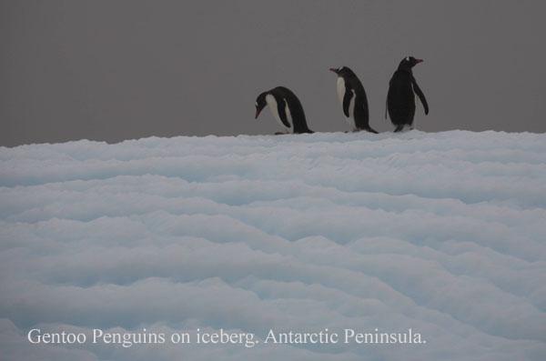 ant000431 - Antarctica 4