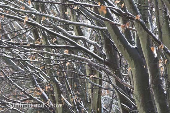 IMG_7357-01 - trees