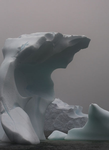 IMG_1901-01 - Antarctica 4