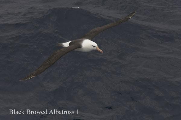 ant000213 - Antarctica 2