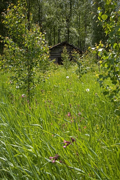 PJD2007-019 - Aspects of Scandinavia