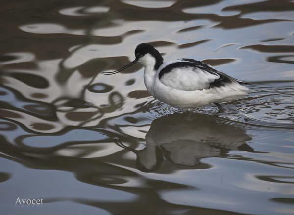 IMG_7948-01 - Birds: Captive