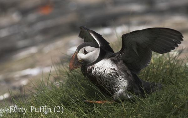 PJD002783-01 - Birds: WIld