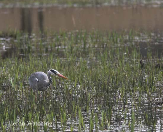 IMG_9376-01 - Birds: WIld