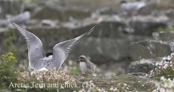 PJD004458-01 - Birds: WIld