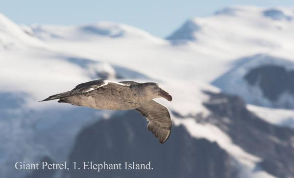 ant000339 - Antarctica 3