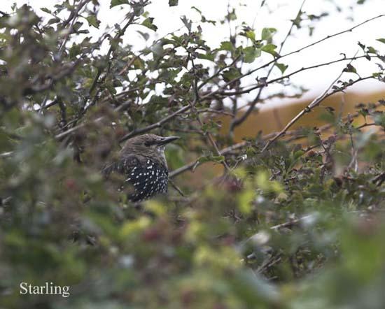 IMG_8711-01 - Birds: WIld