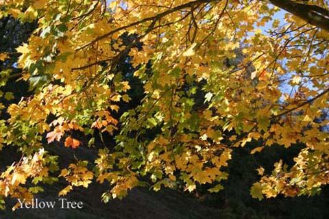 102_0217 - trees
