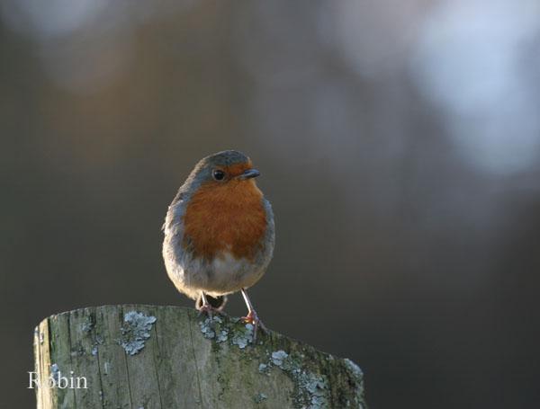 IMG_5570 - Birds: WIld