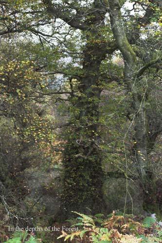 IMG_3985-01 - trees