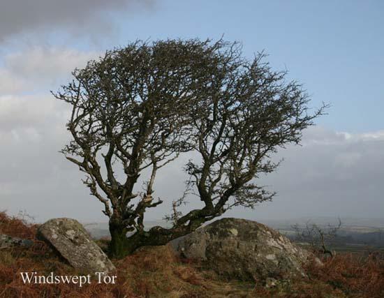 IMG_1520 - trees