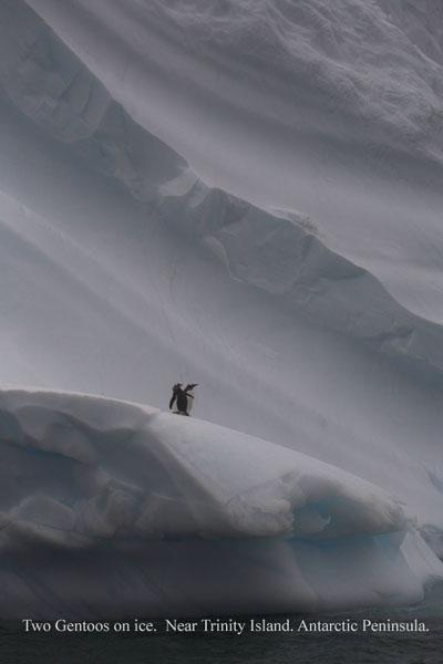 ant000435 - Antarctica 4