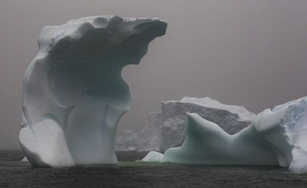IMG_1904-01 - Antarctica 4