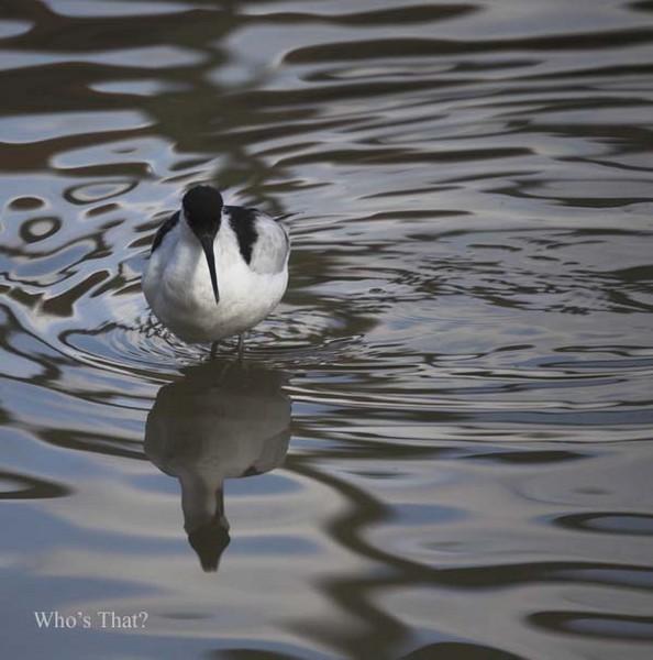 IMG_7947-01 - Birds: Captive