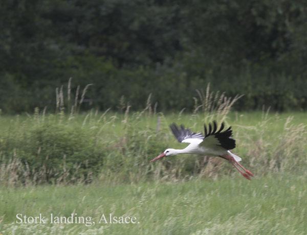 IMG_3555-01 - Birds: WIld