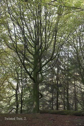 IMG_3908-01 - trees