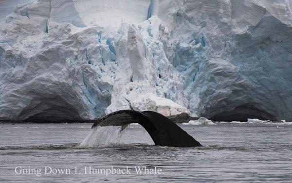 ant000502 - Antarctica 4