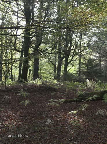IMG_3903-01 - trees