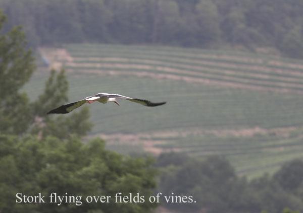 IMG_3576-01 - Birds: WIld