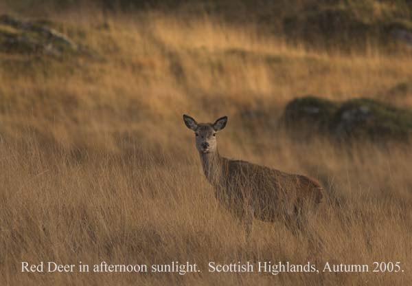 IMG_5236-01 - Animals: Wild