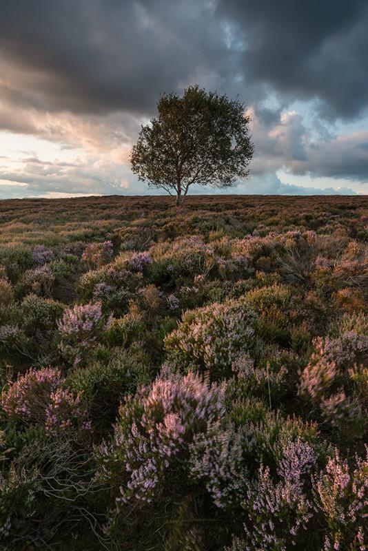 Peak Heather - Landscapes