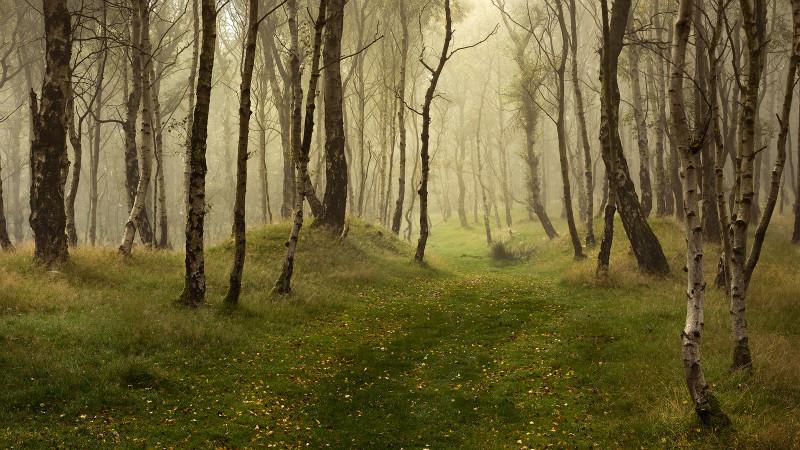 Enchanted - Landscapes