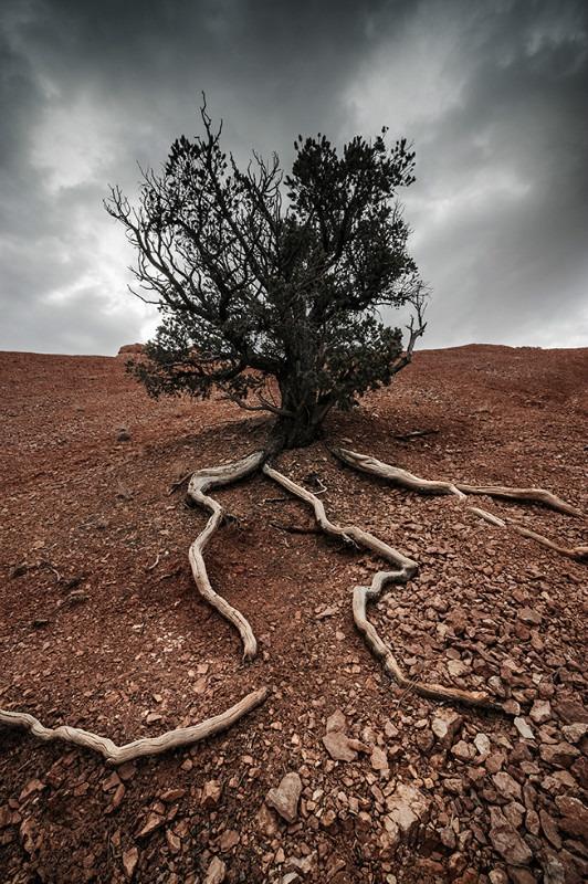 Existence - Landscapes