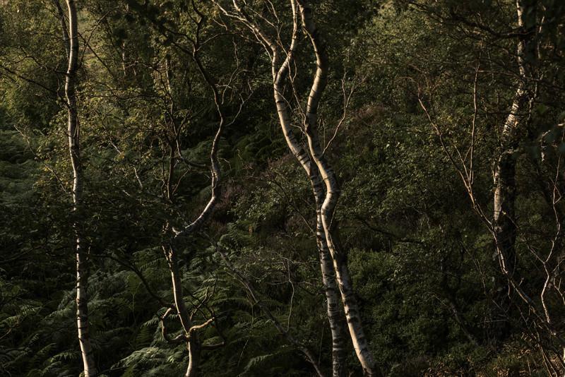 Life Lines - Landscapes