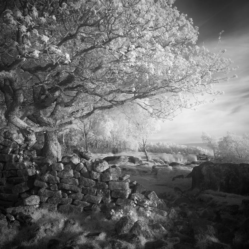 An Oaks tale - Latest Images