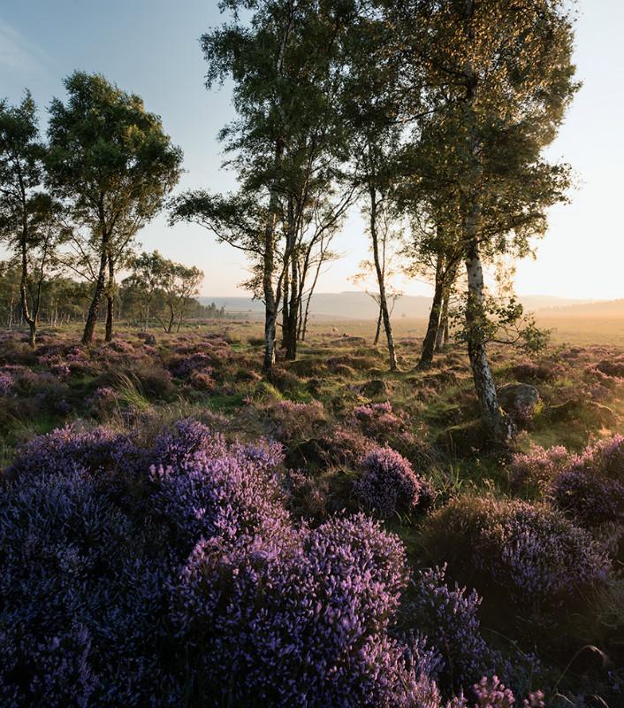 Radiant - Landscapes