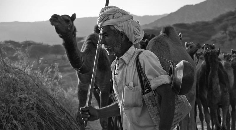 The Camel Run - Travel