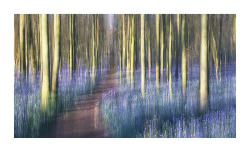 Bluebell woods, Dockey wood
