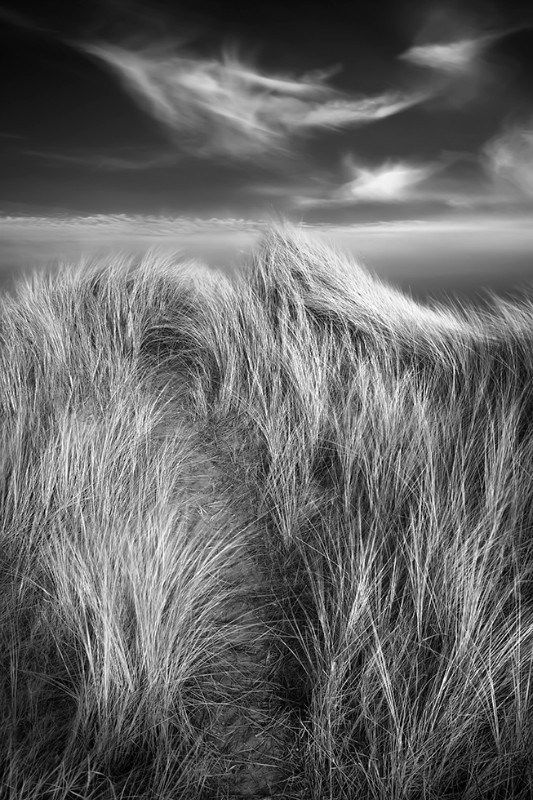 Dancing marram - Black & White