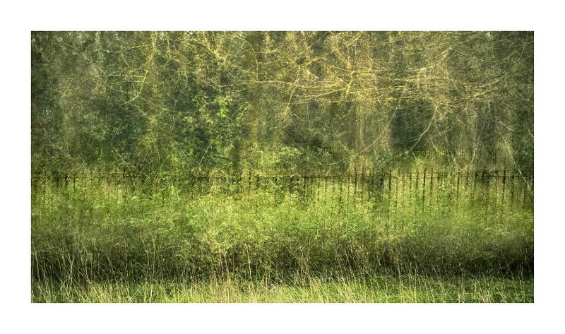 Fenced - Blurred Vision