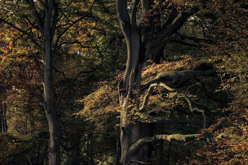 Autumnal - Landscapes
