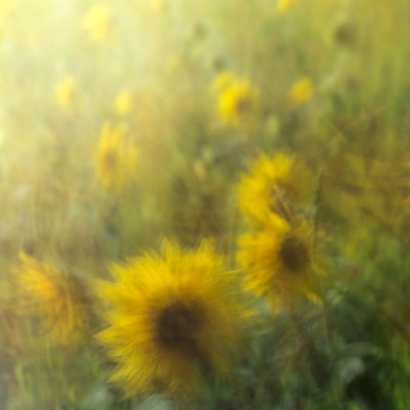 Sun catchers - Latest Images