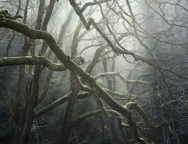 Padley's Web - Padley Gorge / Bolehill Quarry