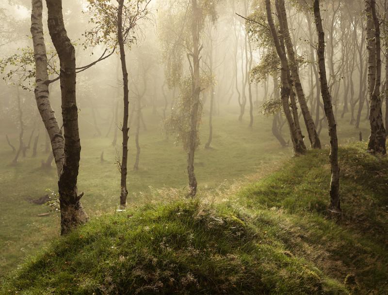 Webs & Dew - Landscapes