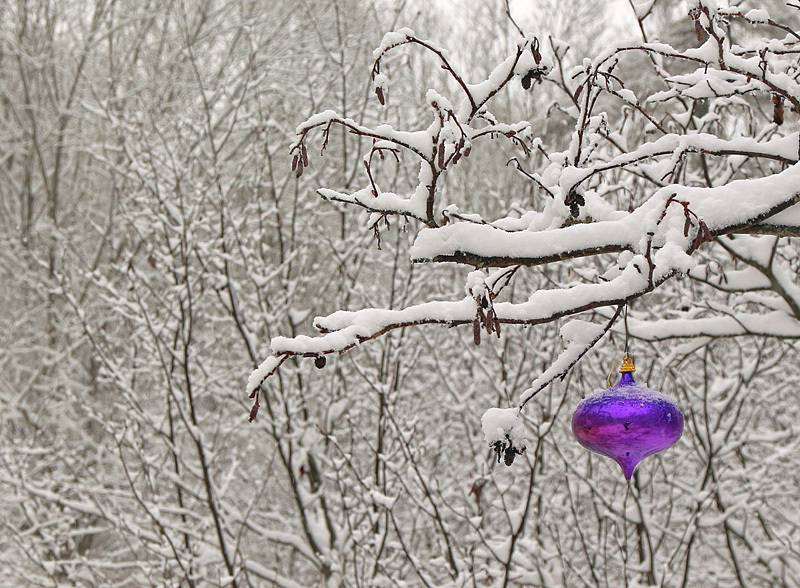The Color Purple - Winterscape