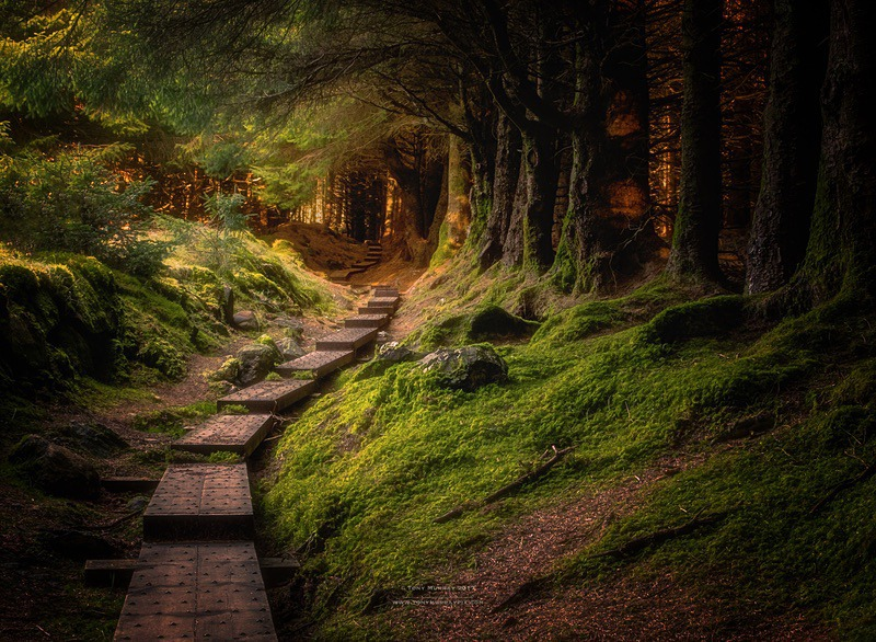Enchanted Forest - Wicklow