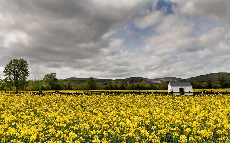 Rivermill Farm - Cahir