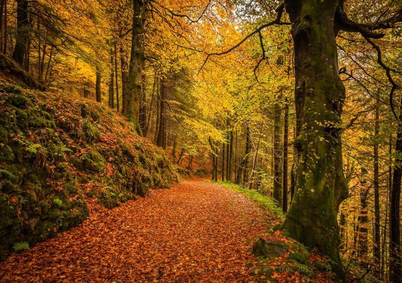 Devils Glen Walk - Wicklow