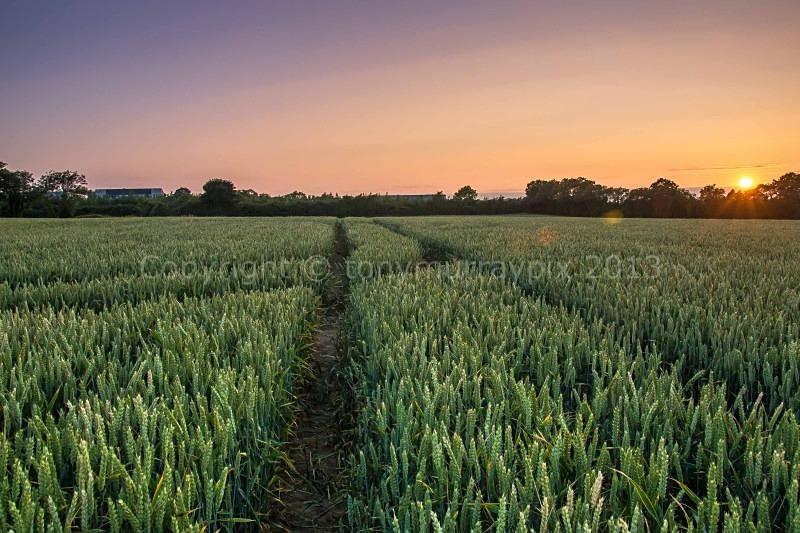 Wheatfield Sunset, Malahide - Malahide