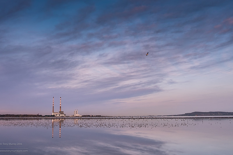 Bird reflections at Sandymount - Sandymount