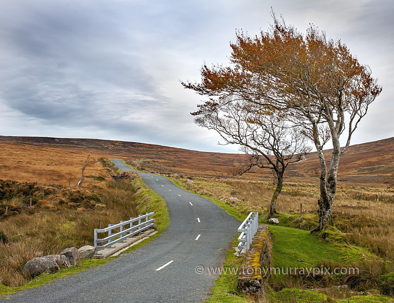 Autumn on Military Road, Wicklow - Wicklow