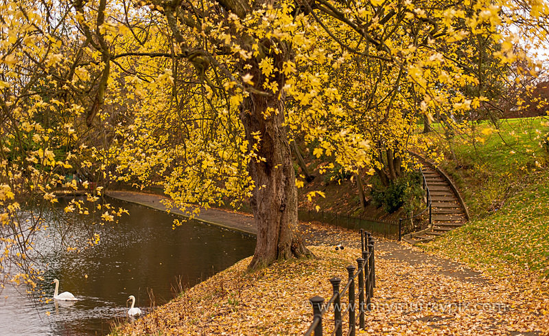 Autumn in the Peoples Park - Dublin