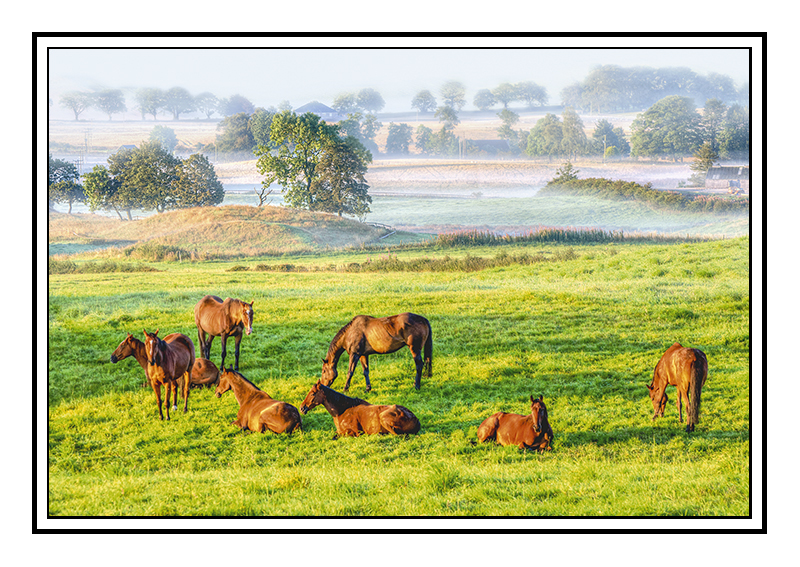 Horses in the mist - Perth & KInross