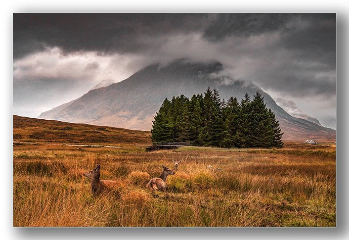 Red Deer at the Buachaille - Highlands & Islands